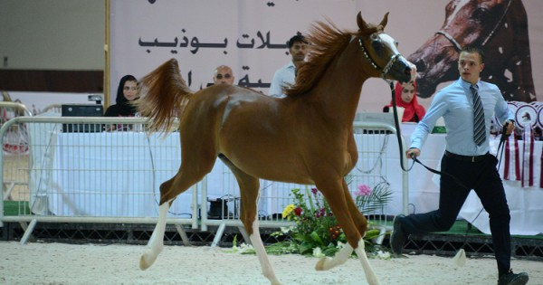 H.H.Shk. Sultan Bin Zayed AlNahyan 9th International Equestrian Festival
