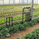 Abu Dhabi Farmers to Harvest 31,050 Tonnes of Produce