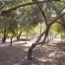 Abu Dhabi Municipality plans to develop the area around Sharia Park in Al Rahba