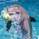 Celebrate Eid at Dubai Dolphinarium