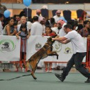 Animal lovers walk for cats in Abu Dhabi