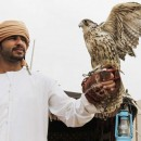 Falconry Conference Begins in Abu Dhabi