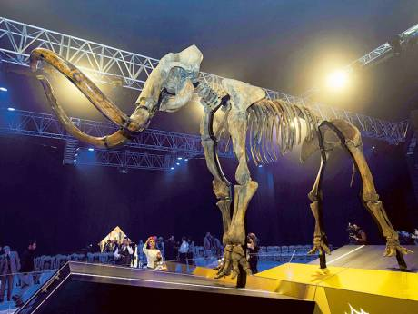 15,000 year-old woolly mammoth unveiled in UAE