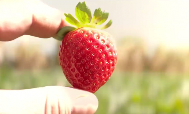 Avoid Food Waste - Life of a Strawberry