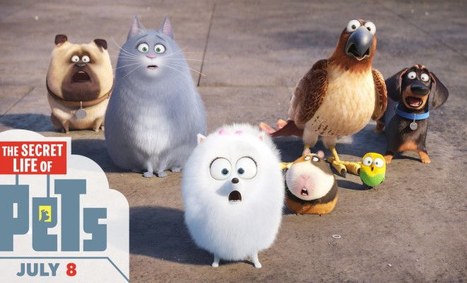 The Secret Life of Pets 2016 - English Movie in Abu Dhabi