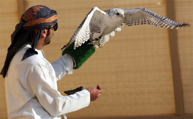The President Cup Falcon Competitions - Culture Event in Abu Dhabi