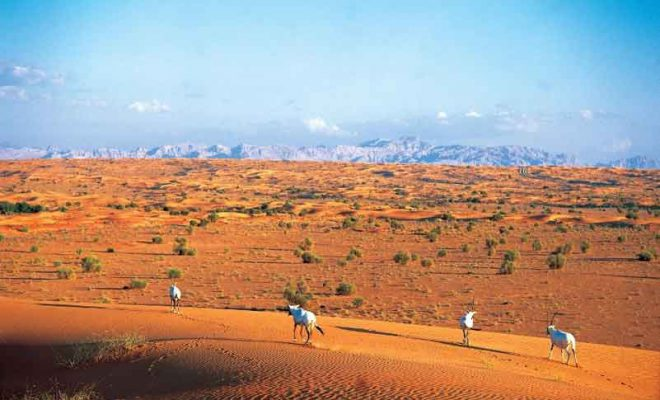 UAE to bring about awareness on 'natural wonders' through ecotourism drive