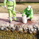 Mosquito breeding sites destroyed in Abu Dhabi