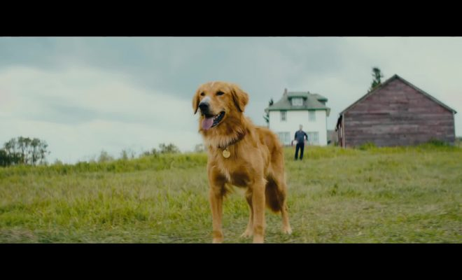 A Dog's Journey-English Movie in Abu Dhabi