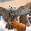 A glimpse of Bedouin life at hunting show in Abu Dhabi